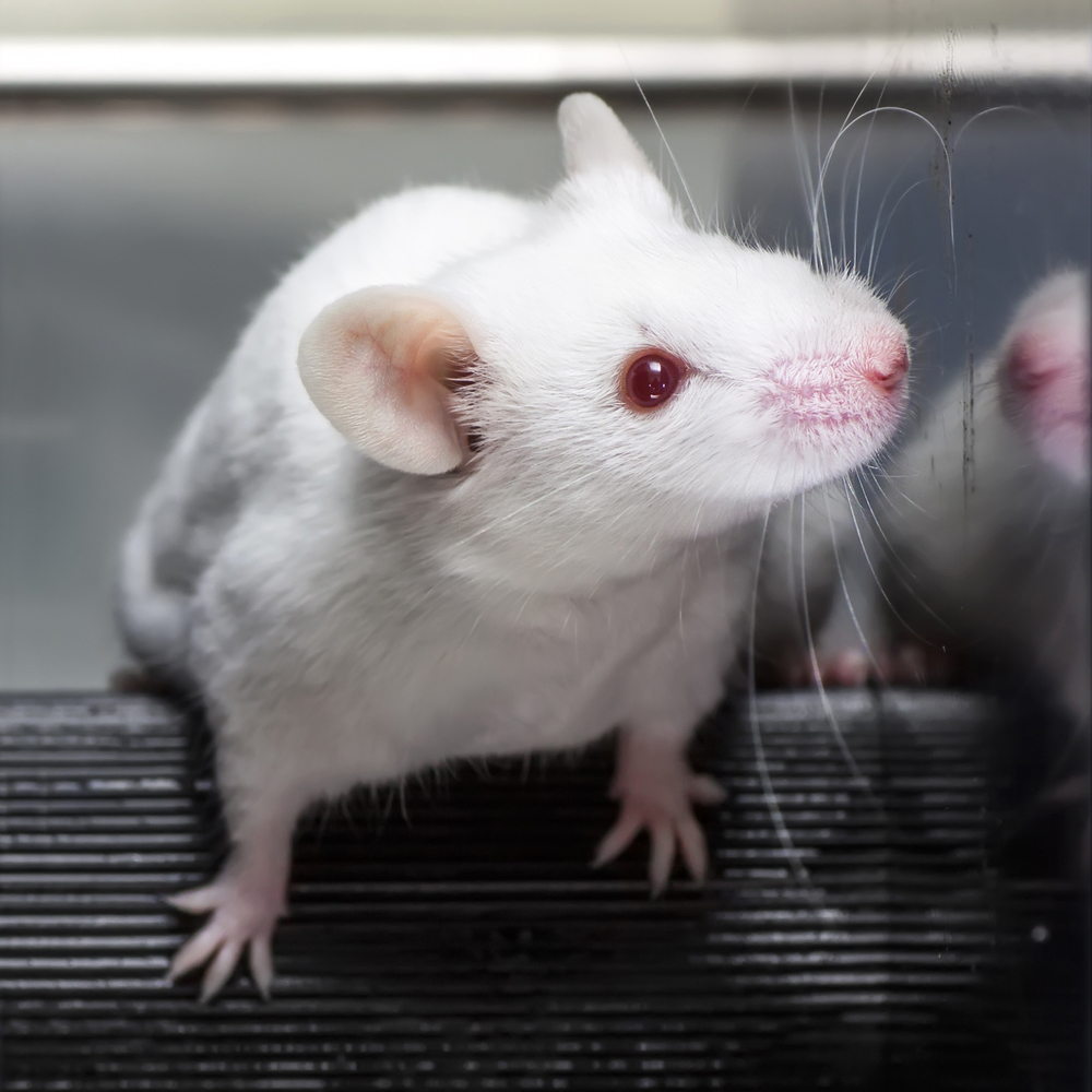 Humanized Mouse Model Promises Novel Therapies For Several Autoimmune Diseases