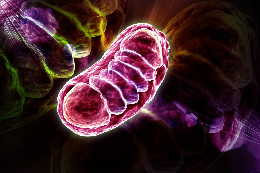 Lupus Linked to Release of Mitochondrial Reactive Oxygen Species