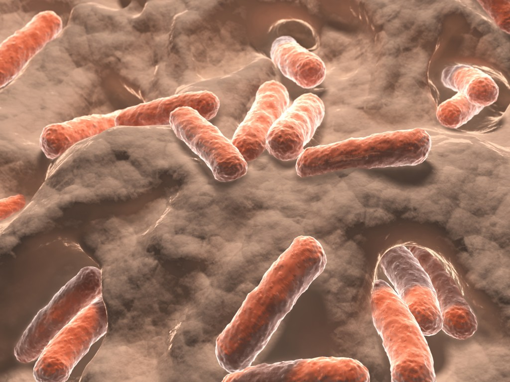 Gut Bacteria Protects Against Inflammation Linked to Lupus and Other Diseases, Study Finds