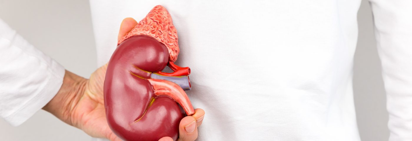 Lupus Nephritis Patients Show Impact of Disease in Kidneys Over Time, Study Says
