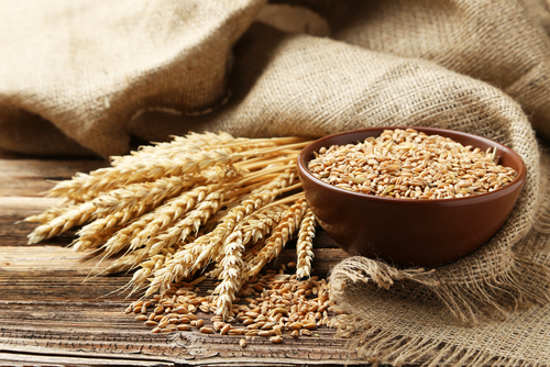 Wheat Proteins May Trigger Inflammation in Lupus and Other Chronic Conditions