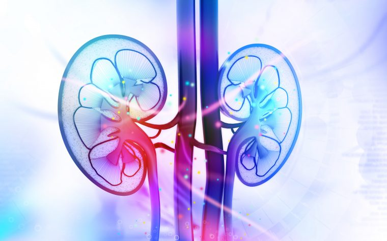 Lupus nephritis treatments