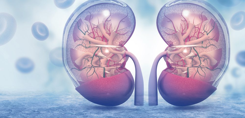 Small Molecule LA1 Suppresses Inflammation, Improves Renal Function in SLE Patients