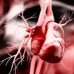 Lupus heart and heart disease