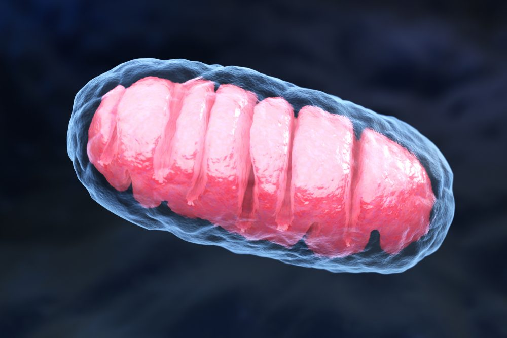 Lupus Flares May Be Linked to Damage to Mitochondria, Study Reports